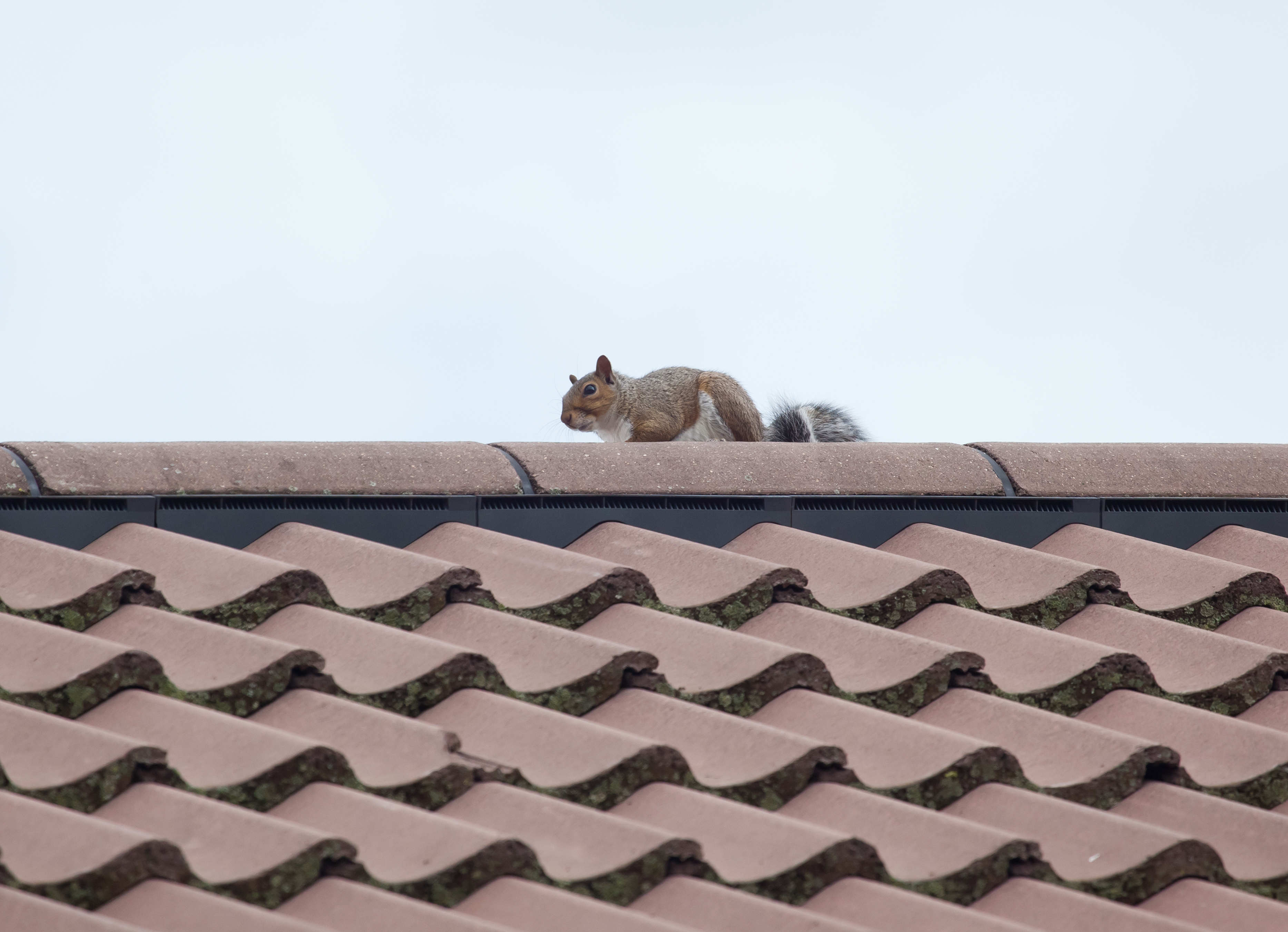 Keep Pests Out Of Your Attic Amp Off Your Roof Warner