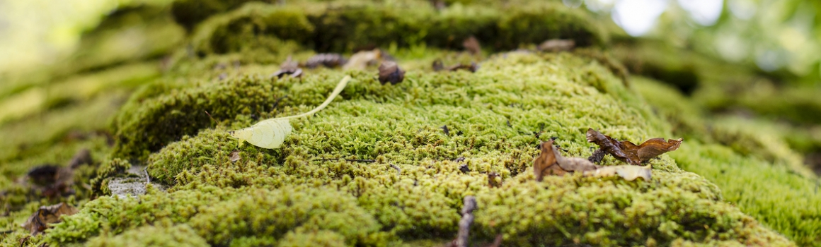 Moss on Tree in Vancouver WA