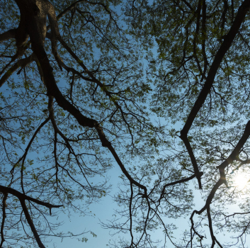 How Far Should Tree Branches Be From A Roof?