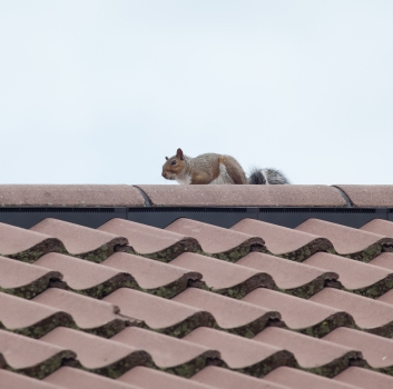 Keep Pests Out of Your Attic and Off Your Roof, For Good!