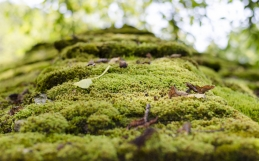 How to Get Rid of Moss, the Loveliest Looking Roof Killer