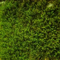 Algae Defender Roofing Shingles