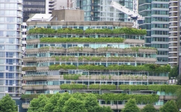 Your Building is Alive: The Story of the Green Roof