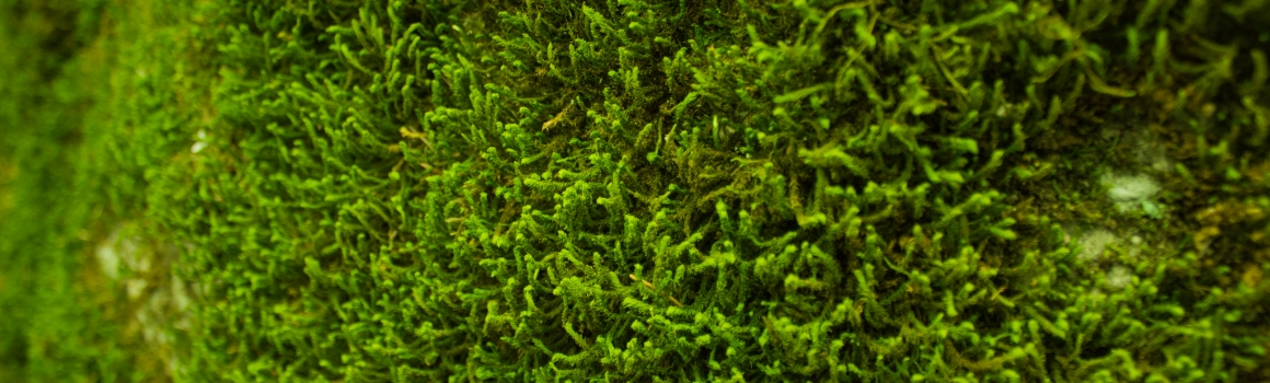 Moss Removal for Your Roof