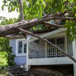 Falling tree after hard storm to damage house