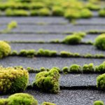 Get rid of roof moss Warner Roofing