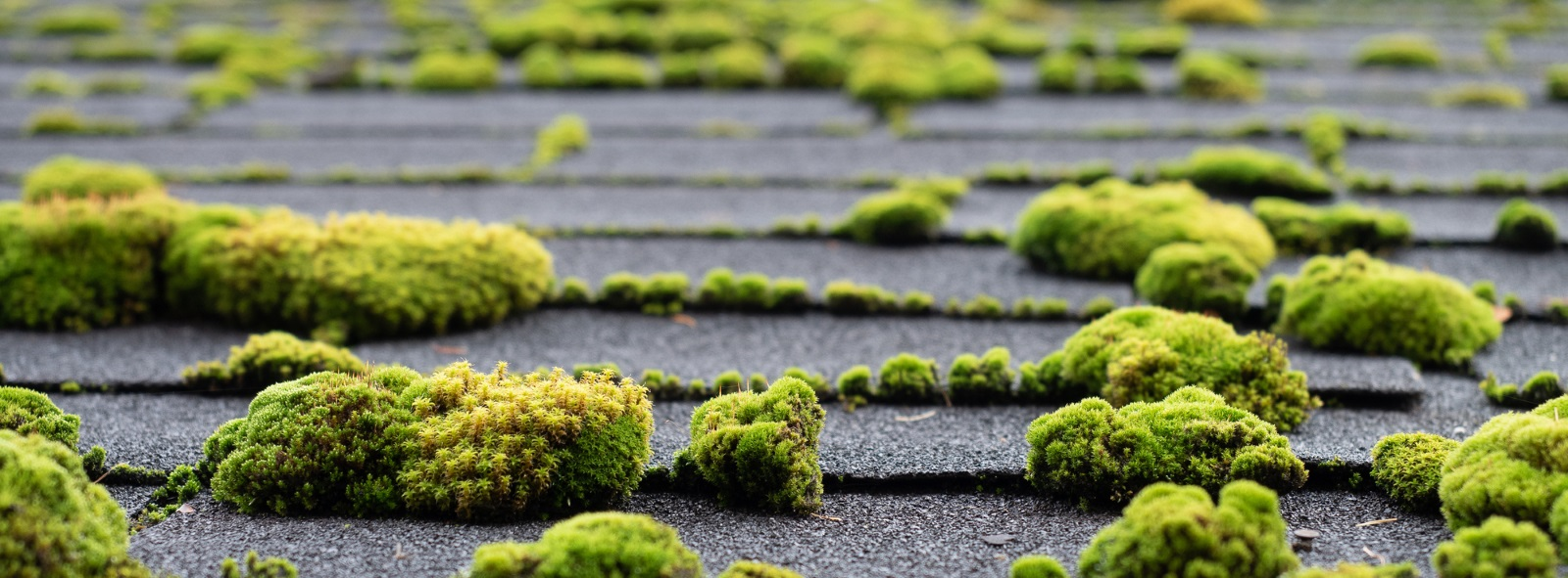 How To Remove Moss From Roof Warner Roofing