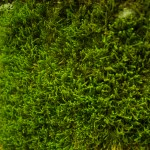 moss-removal-roofs